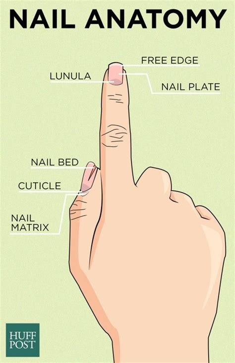 Do Your Thumbs What It Takes by But Easy Nail Designs For Nails 2017 2018