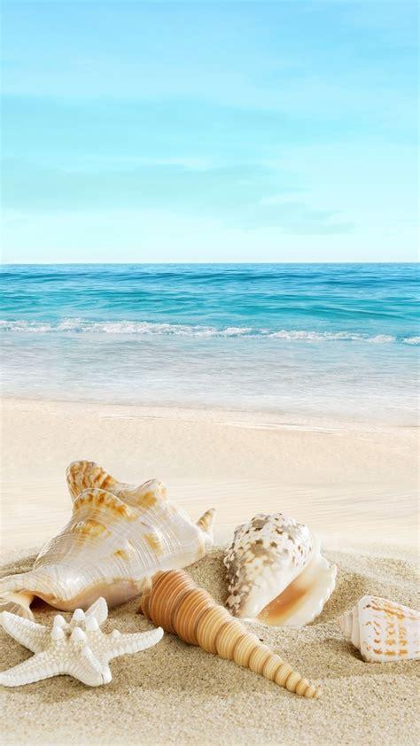 nature sunny sea shell beach iphone  wallpaper color