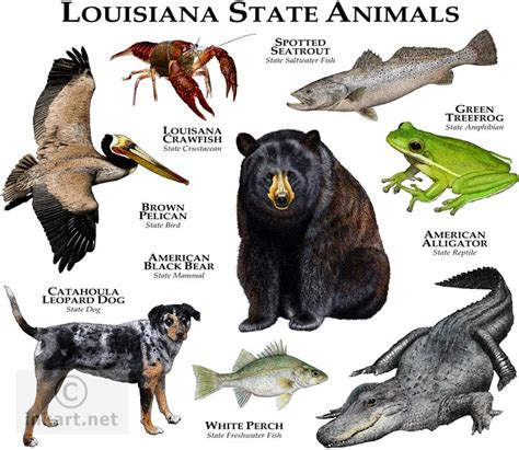 louisiana state colors state animals of louisiana line and color