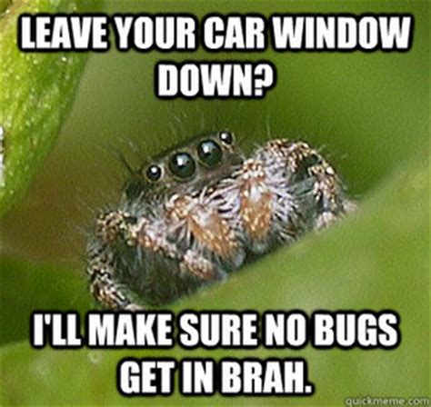 Misunderstood Spider Meme - misunderstood spider meme related keywords misunderstood