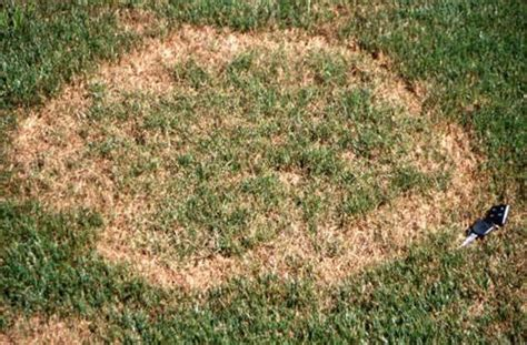 how to get rid of grass rust fungus grass diseases and fungus