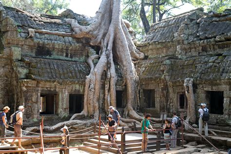 Töff In English by File Ta Prohm Sprung Tree Jpg Wikimedia Commons