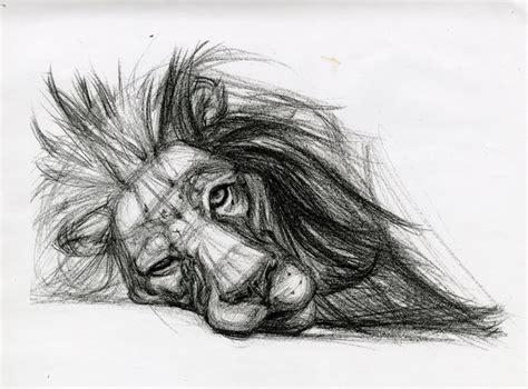 sketchbook of a zoo c89947621981139b19008be04cb44672 jpg 736 215 545 animals