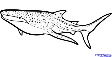 whale shark coloring pages gianfreda net how to draw a whale shark whale shark step 6 1
