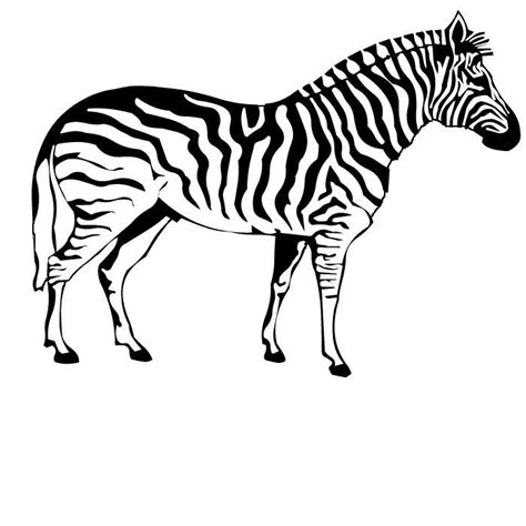 zebra pattern coloring page zebra coloring pages for kids printable zebra coloring