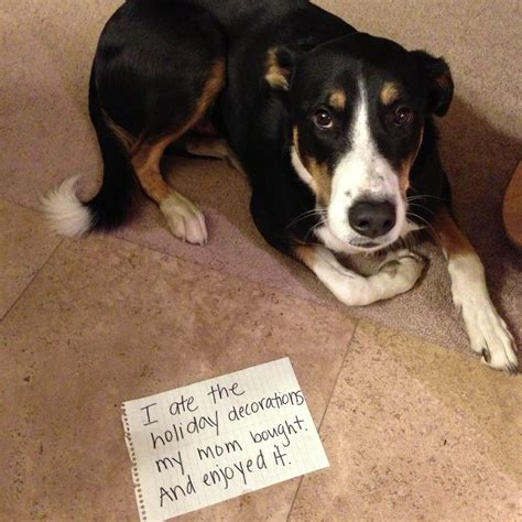 i dogs 15 adorably hilarious shaming photos poopy guff