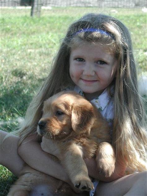 do golden retrievers make guard dogs golden retriever puppies for sale mildura dogs for sale puppies for sale mildura