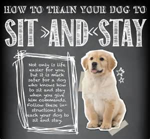 infographic teach your to sit and stay paws for peeps