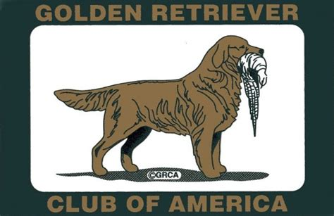 golden retriever club of america mardovar golden retrievers about us