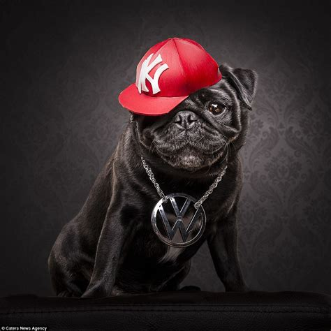 gangster pug adam jackman transforms pugs into cube and 2pac lookalikes daily mail