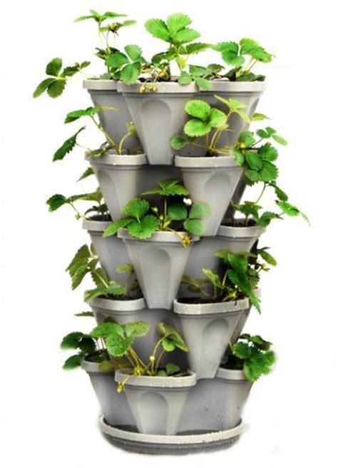tier stackable strawberry herb flower  vegetable