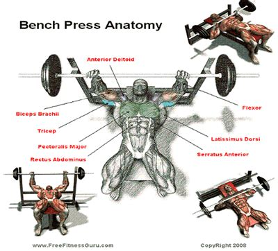 bench press definition 6 exercises that build muscle