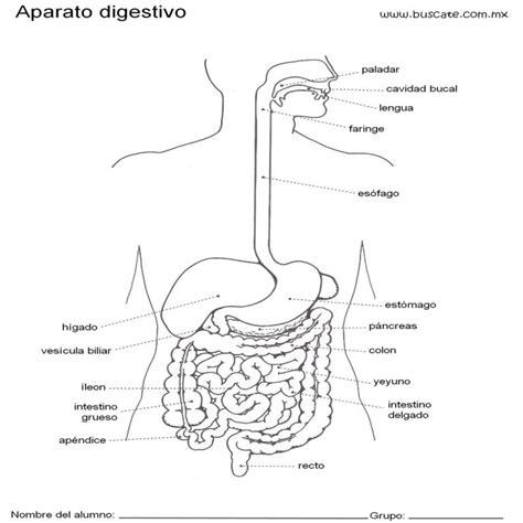 dibujos para pintar juegos de ciencias naturales esquema del aparato digestivo con nombres ciencias