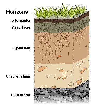 soil horizon wikipedia