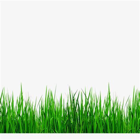 green grass clipart green grass border details grass clipart green grass