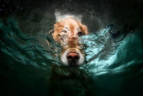 amazing underwater dog pictures  seth casteel