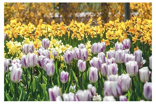 tulip festival thanksgiving point 2018 coupon