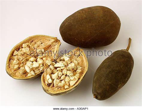 baobab fruit baobab seed is baobab seeds stock photos baobab seeds stock images alamy