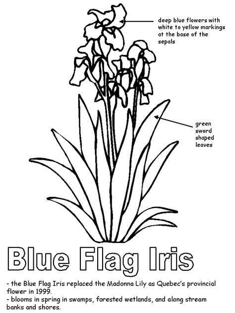 coloring pages quebec how to draw a canadian flag az coloring pages