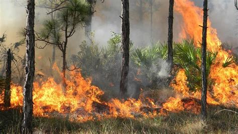 florida wildfires significant wildfires burning thousands of acres across