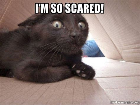 Scared Cat Meme - i m so scared schitzo cat make a meme