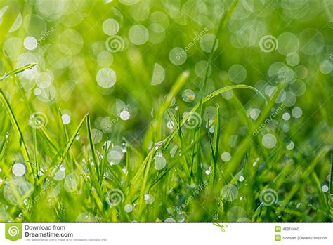 Fresh Green Light by Blades Of Grass With The Morning Light Stock Photo Image