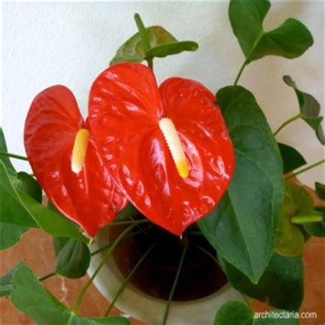 jenis bunga  dekorasi interior ruangan sangkarmas