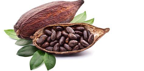 el cacao m 225 s que un alimento taringa