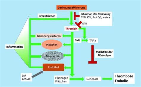 protein z mangel entstehung thrombosen trillium gmbh medizinischer