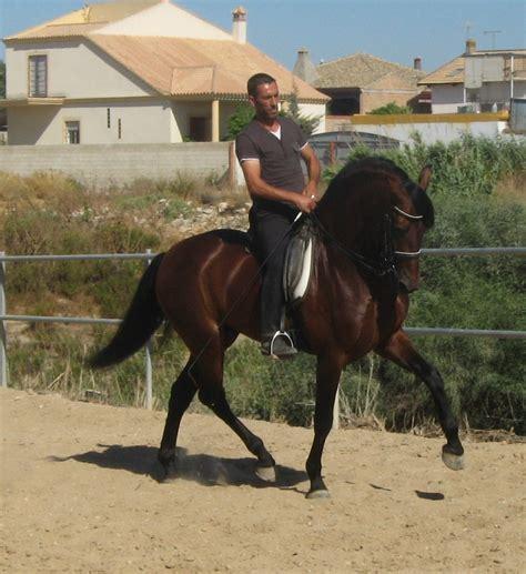 for sale horses western pleasure horses for sale keywordsfind