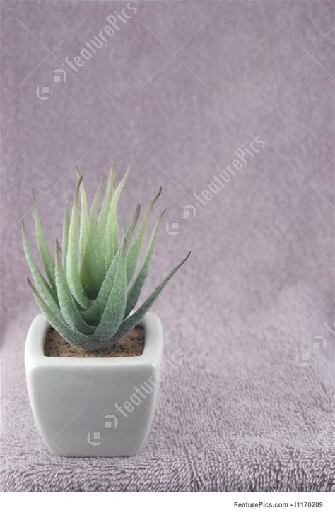 small potted cactus plants stock photo image 68600366 small cactus stock photograph i1170209 at featurepics
