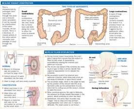 color of bowel movements bowel movement chart with explanation 2017 2018 best