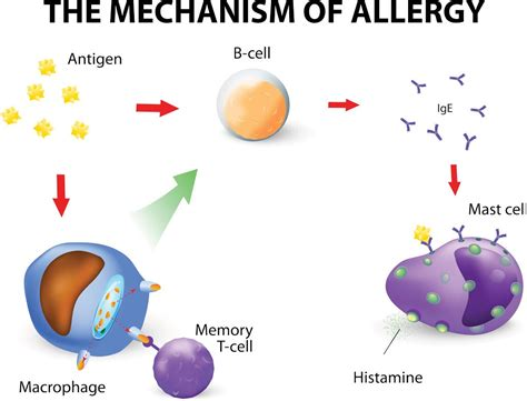 shoo for allergies allergy images