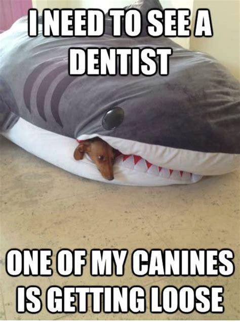 Funny Shark Meme - shark meme memes