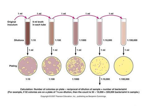 Alat Laboratorium Umum Petri Dish pour plate method principle procedure uses and dis