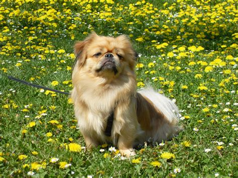 hunde decken – Hunde Decken Hundedecken günstig kaufen bei Hund Unterwegs
