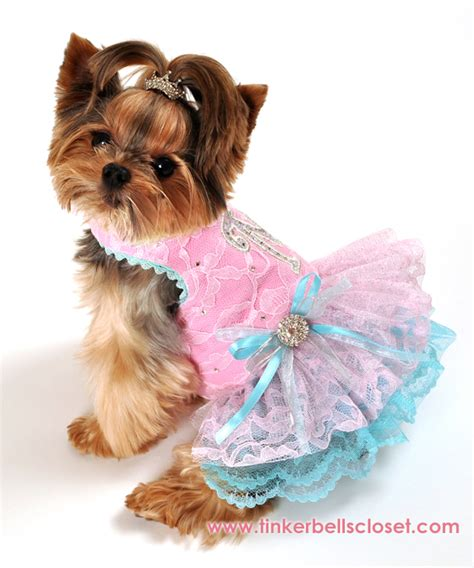 clothes for dogs clothes for dogs breeds picture