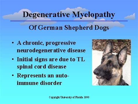 dm in dogs canine degenerative myelopathy