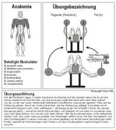 brustmuskeln zuhause trainieren fitnesslover brust 252 bungen
