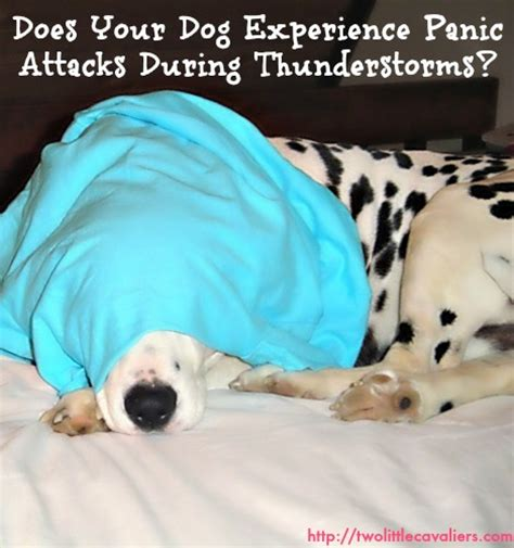 panic attacks in dogs panic attacks for dogs method