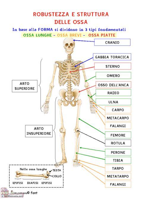 test italiano interno risultati muoversi il sistema scheletrico imparo