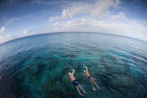 swing in the ocean swim all day total immersion helps swimmers who struggle