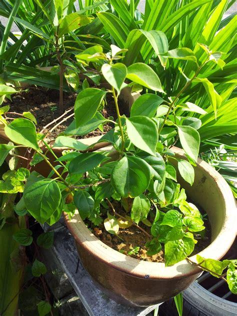 na lovely kitchen pokok bunga kertas