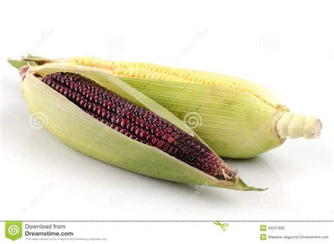 Corn L by Sweet Corn Zea Mays L And Maiz Morado Flour Corn Zea