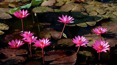 floral water flower wallpaper