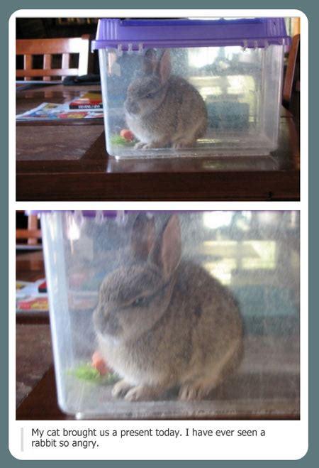 Angry Bunny Meme - i present you angry rabbit