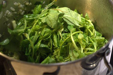 cuisiner des fanes de radis 28 images pesto de fanes