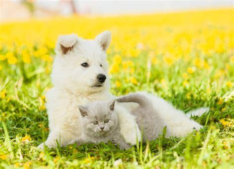 liquid benadryl dosage for dogs benadryl for dogs cats medication dosage info