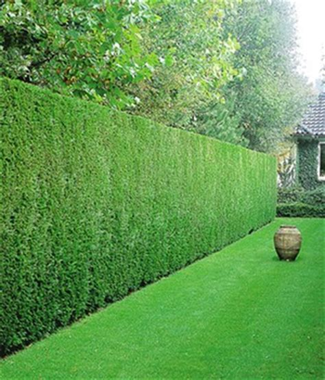 baldur garten emejing heckenpflanzen photos house design ideas