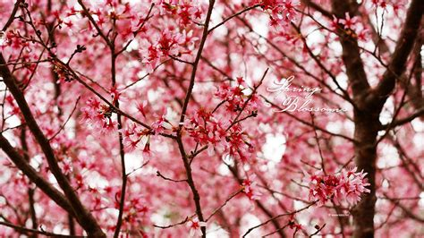 Flower Bloom by Spring Wallpapers By Kate Net